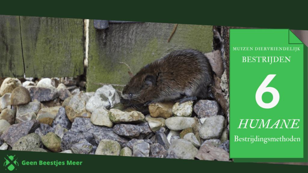 Muizen diervriendelijk bestrijden