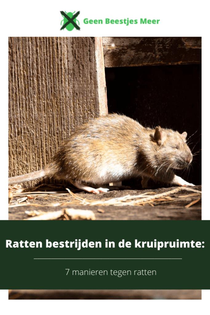 Pinterest Ratten bestrijden in de kruipruimte_ 7 manieren tegen ratten