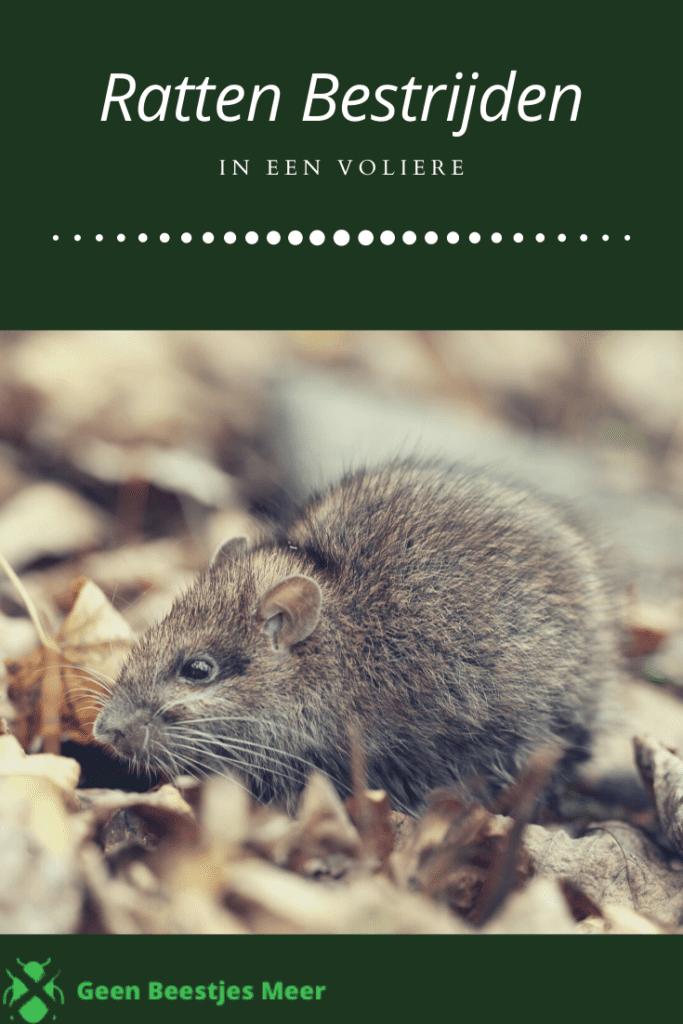 Pinterest ratten bestrijden in een volière