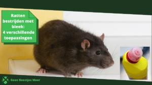 Ratten bestrijden met bleek_ 4 verschillende toepassingen