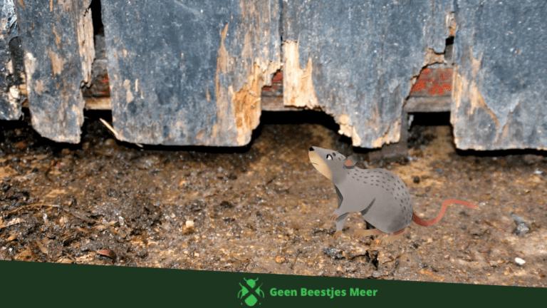 Zorg dat ratten niet naar binnen kunnen