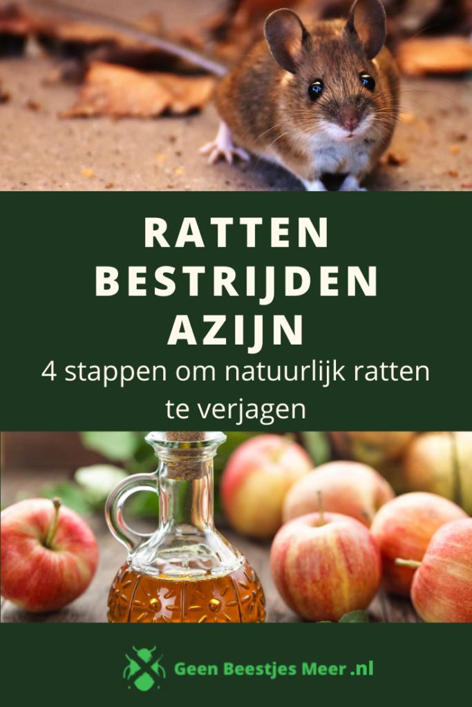 pinterest ratten bestrijden azijn (1)