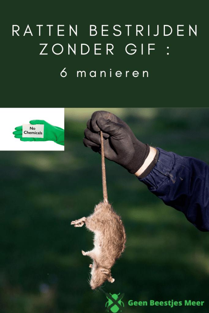 pinterest ratten bestrijden zonder gif_ 6 manieren