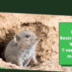 Ratten bestrijden in een volière: 7 verschillende methoden