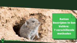 ratten bestrijden in een volière_ 7 verschillende methoden