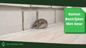 ratten bestrijden met geur