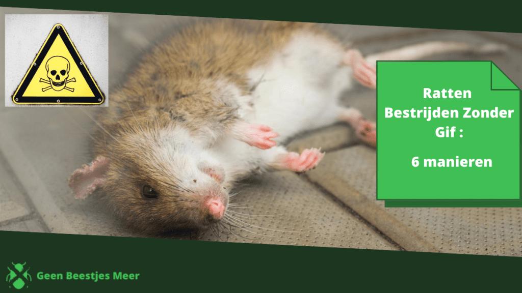 ratten bestrijden zonder gif_ 6 manieren