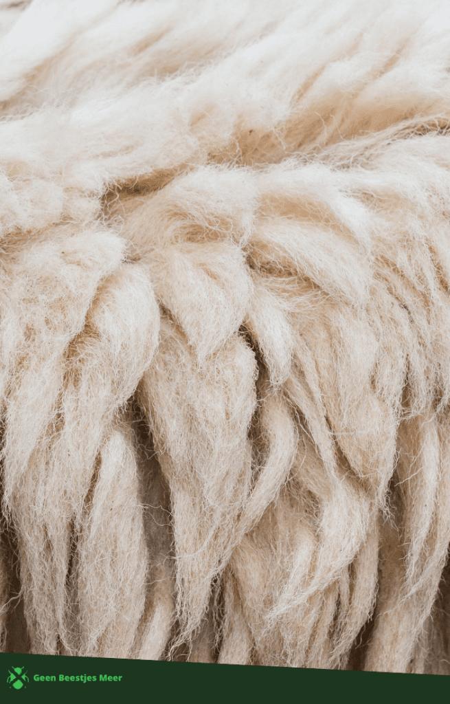wol trekt motten aan