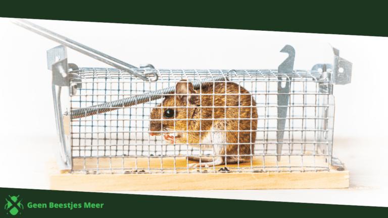 Hoe gebruik je lokdozen en muizenvallen_