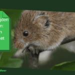 Muizen bestrijden in het gazon: gids tegen muizen in het gras