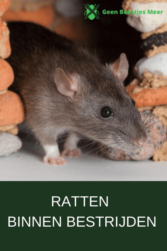 Pinterest ratten binnen bestrijden