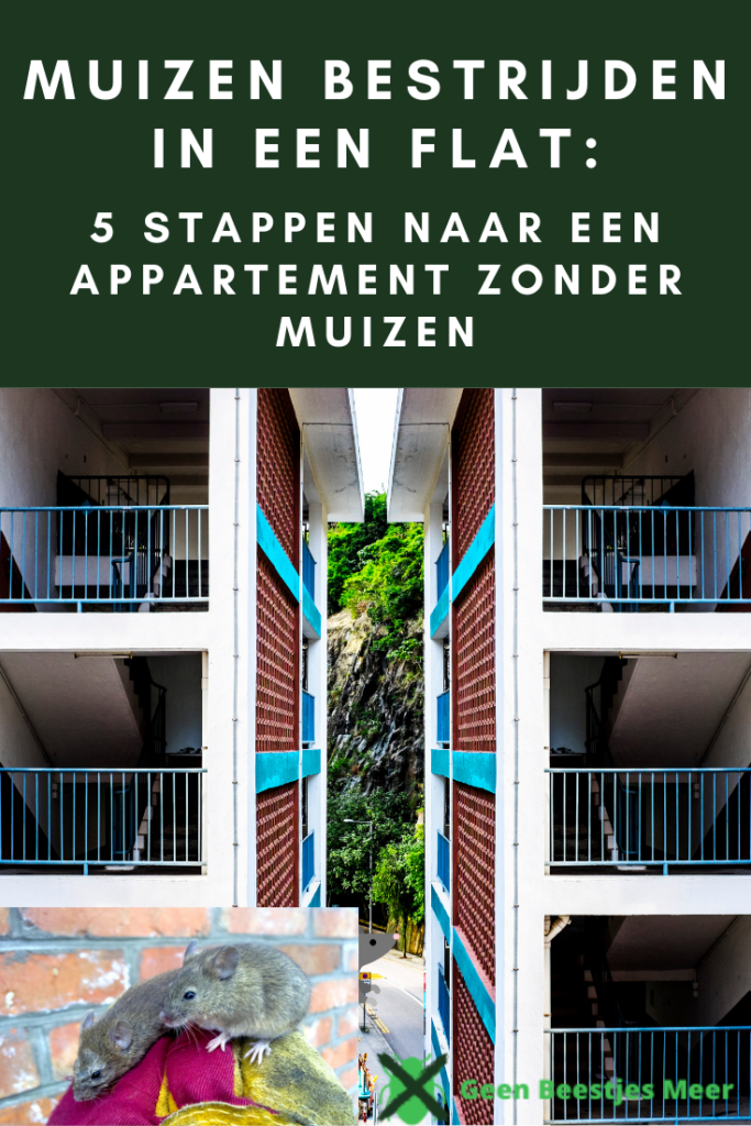 pinterest Muizen bestrijden in een flat_ 5 stappen naar een appartement zonder muizen (1)