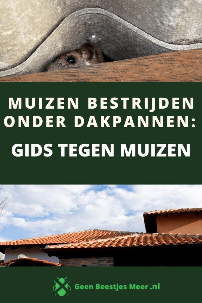 pinterest Muizen bestrijden onder dakpannen_ Gids tegen muizen
