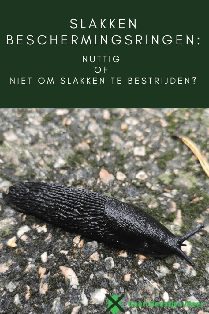 pinterestSlakken beschermingsringen_ nuttig of niet om slakken te bestrijden_