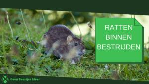 ratten binnen bestrijden