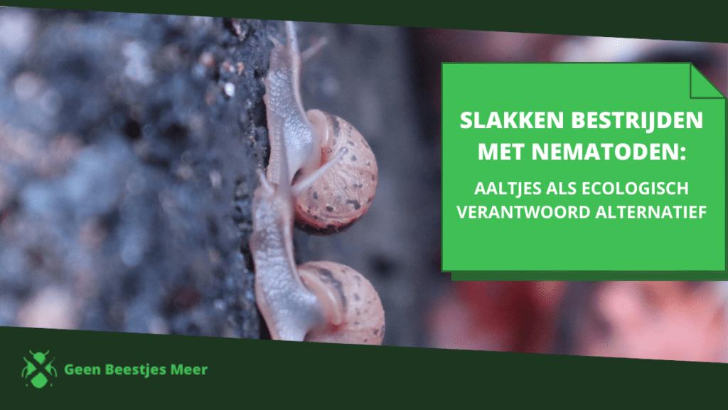 slakken bestrijden met nematoden_ aaltjes als ecologisch verantwoord alternatief