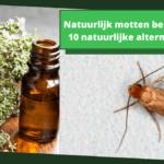 Natuurlijk motten bestrijden: 10 natuurlijke alternatieven