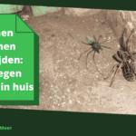 Binnen spinnen bestrijden: gids tegen spinnen in huis