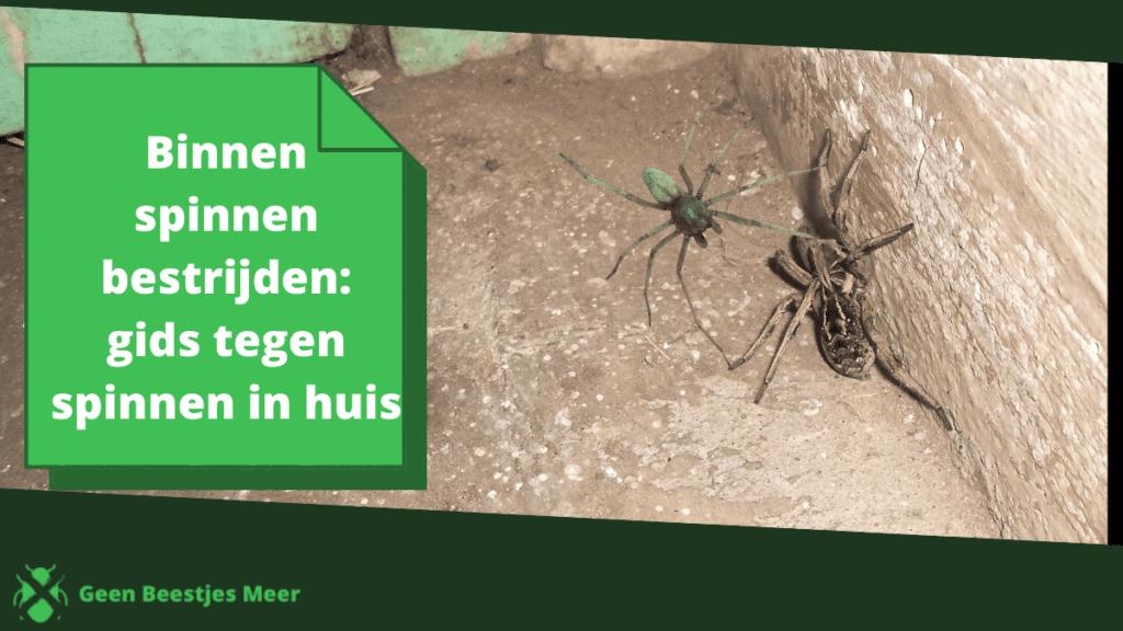 Binnen spinnen bestrijden_ gids tegen spinnen in huis