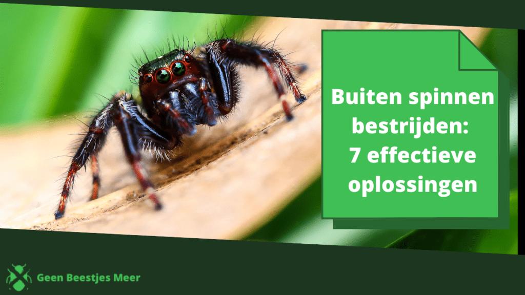 Buiten spinnen bestrijden_ 7 effectieve oplossingen