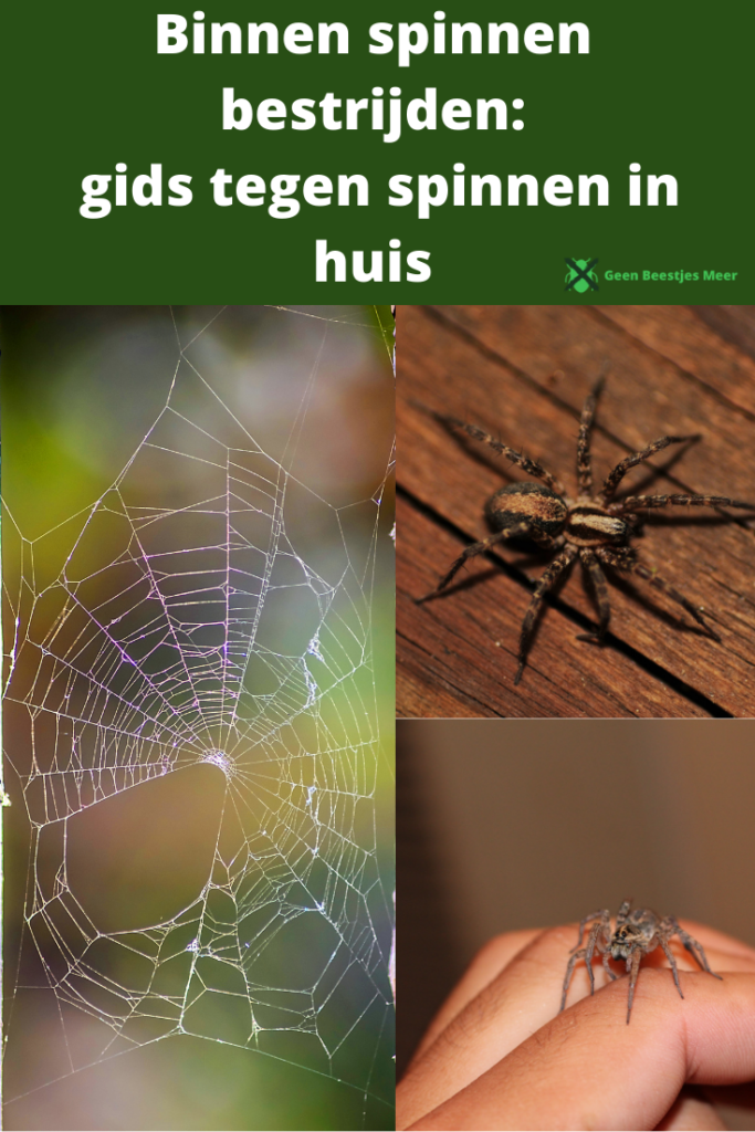Pinterest Binnen spinnen bestrijden_ gids tegen spinnen in huis