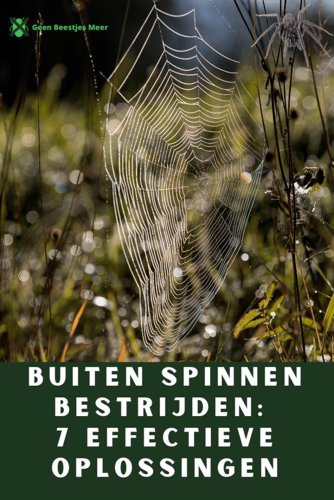 Pinterest Buiten spinnen bestrijden_ 7 effectieve oplossingen
