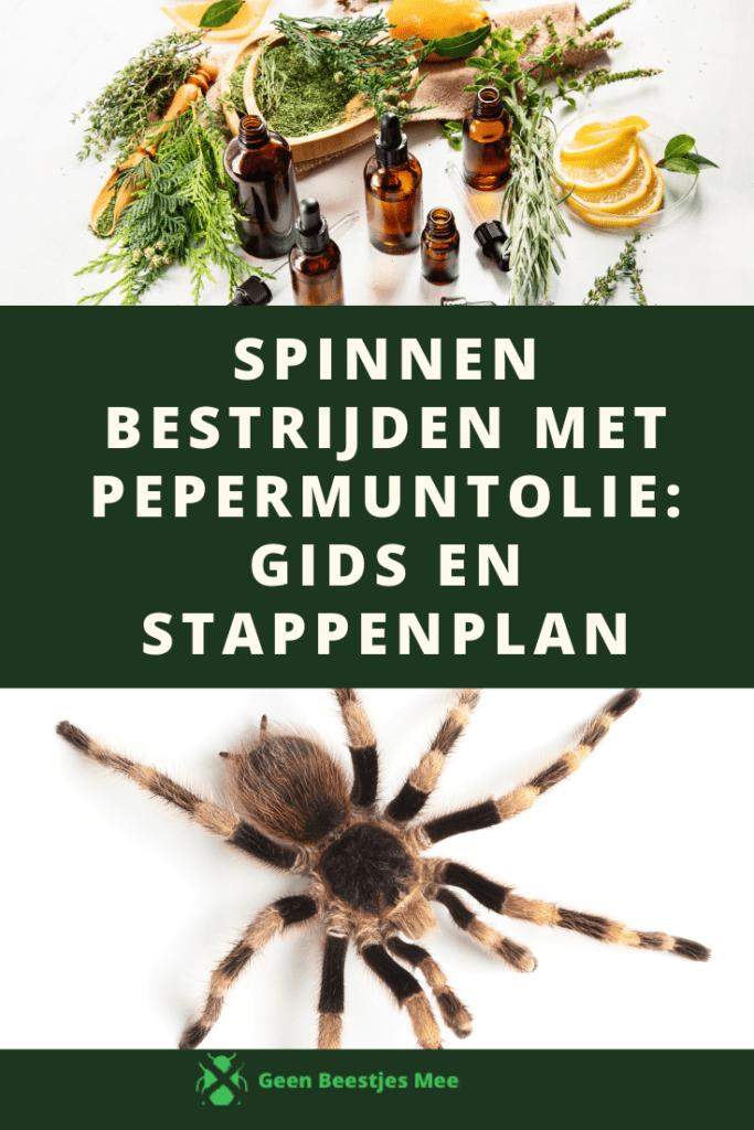 Pinterest Spinnen bestrijden met pepermuntolie_ gids en stappenplan