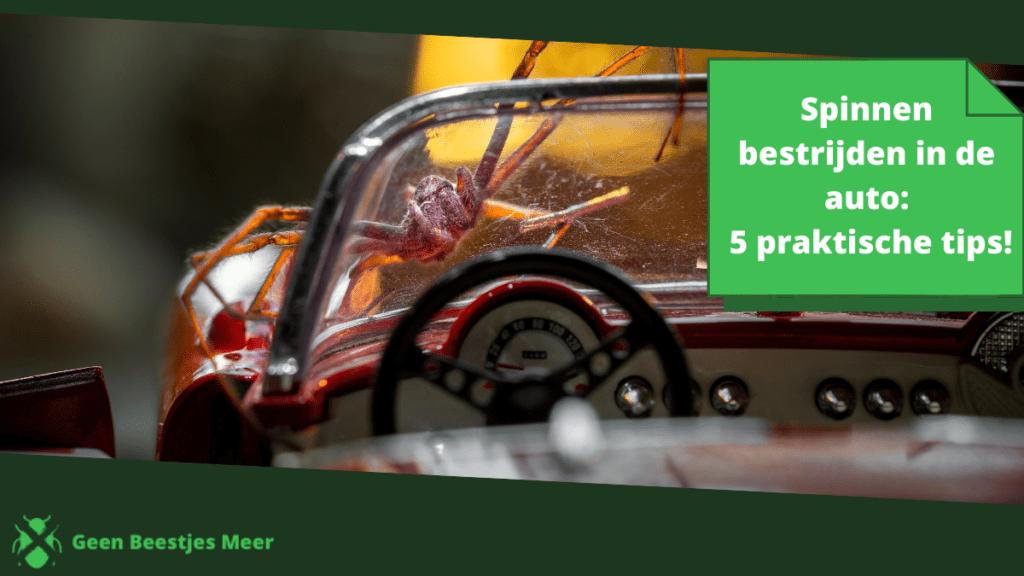 Spinnen bestrijden in de auto_ 5 praktische tips!