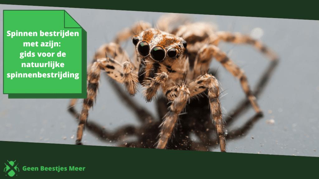 Spinnen bestrijden met azijn_ gids voor de natuurlijke spinnenbestrijding