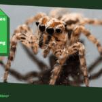 Spinnen bestrijden met azijn: gids voor de natuurlijke spinnenbestrijding