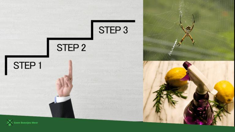 Stappenplan voor het bestrijden van spinnen met pepermuntolie