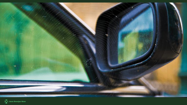 Wat doen de spinnen in je auto en hoe komen ze daar_