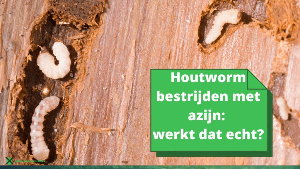 Houtworm bestrijden met azijn werkt dat echt (2)