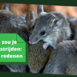 Waarom zou je muizen bestrijden: 10+ goede redenen