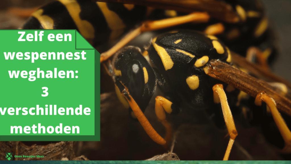 Zelf een wespennest weghalen 3 verschillende methoden (1)