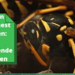 Zelf een wespennest weghalen: 3 verschillende methoden