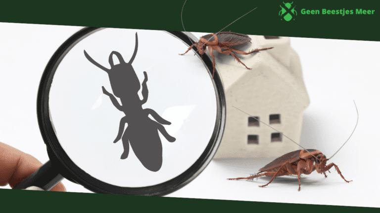 De gemiddelde kosten van het bestrijden van kakkerlakken