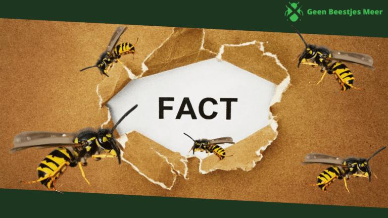 Wespen-weetjes