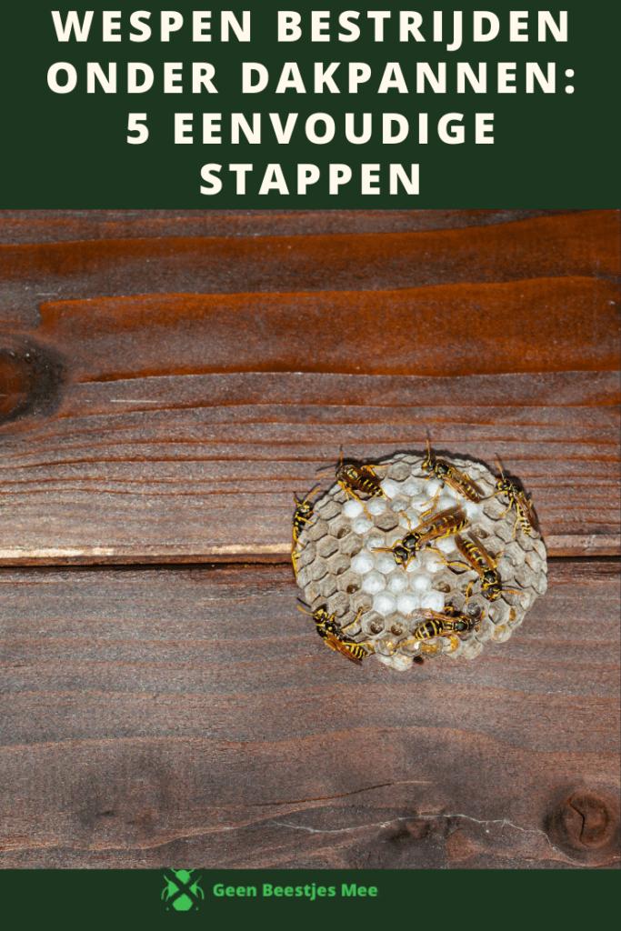 Pinterest Wespen bestrijden onder dakpannen 5 eenvoudige stappen