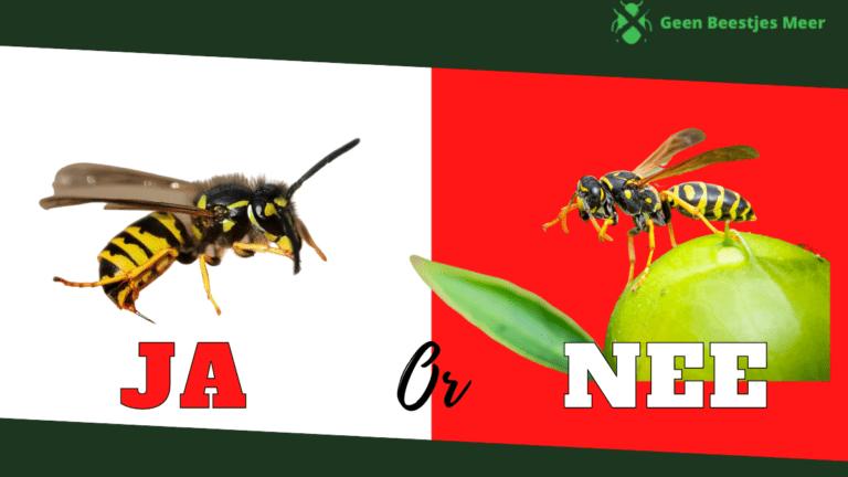 Well of niet wespen bestrijden