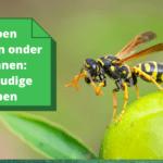 Wespen bestrijden onder dakpannen: 5 eenvoudige stappen