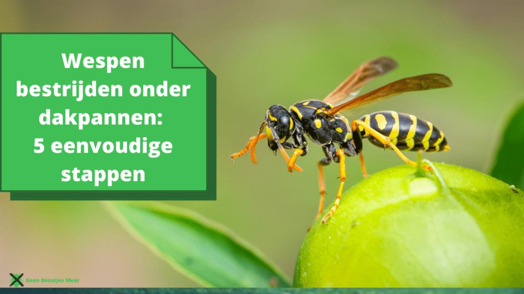 Wespen bestrijden onder dakpannen 5 eenvoudige stappen