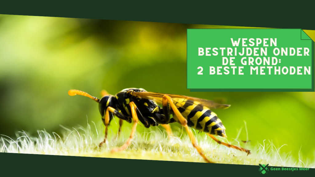 Wespen bestrijden onder de grond 2 beste methoden