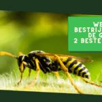 Wespen bestrijden onder de grond: 2 beste methoden