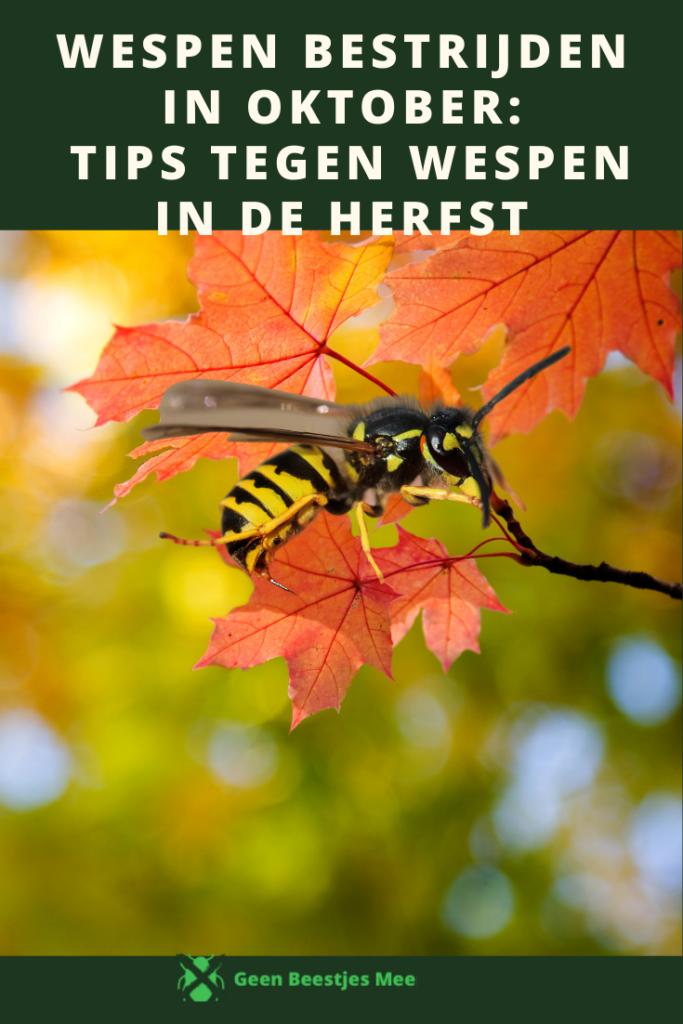 Pinterest Wespen bestrijden in oktober tips tegen wespen in de herfst