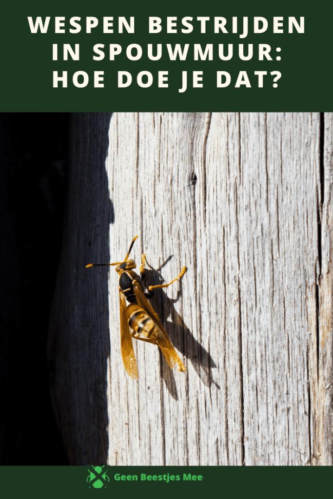 Pinterest Wespen bestrijden in spouwmuur hoe doe je dat