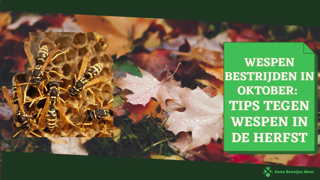 Wespen bestrijden in oktober tips tegen wespen in de herfst