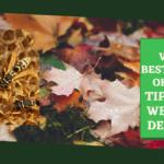 Wespen bestrijden in oktober: tips tegen wespen in de herfst