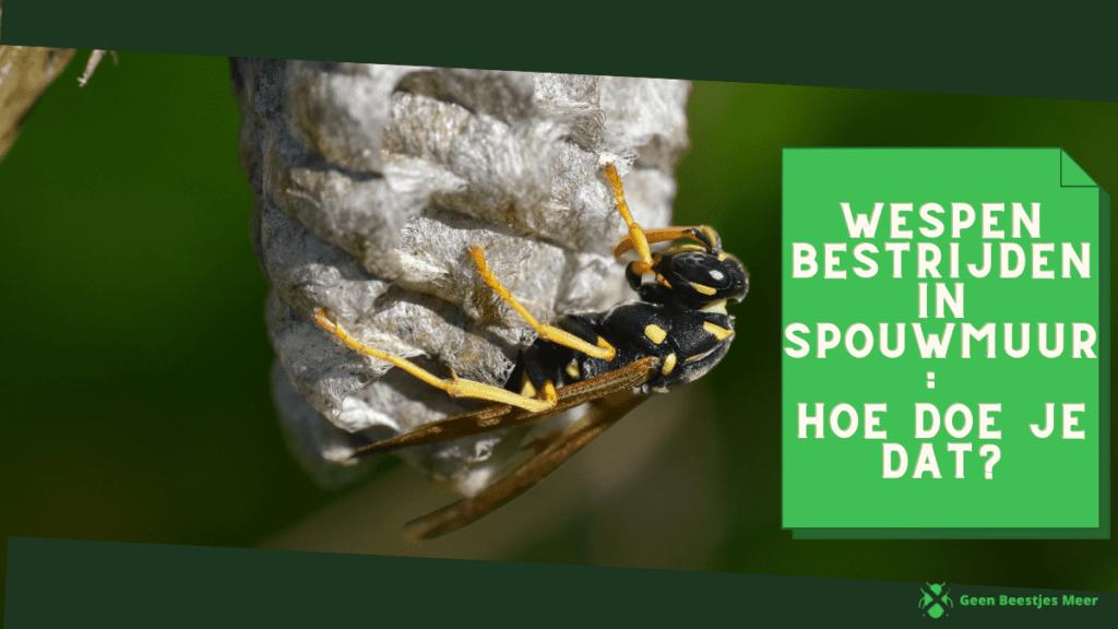 Wespen bestrijden in spouwmuur hoe doe je dat